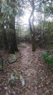 Trail to Albert Mountain